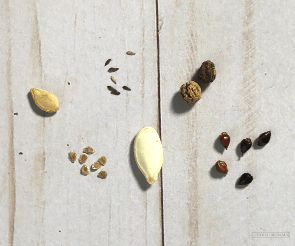 Multiple different sized seeds