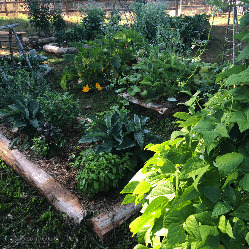 Garden beds full of vegetables and flowers