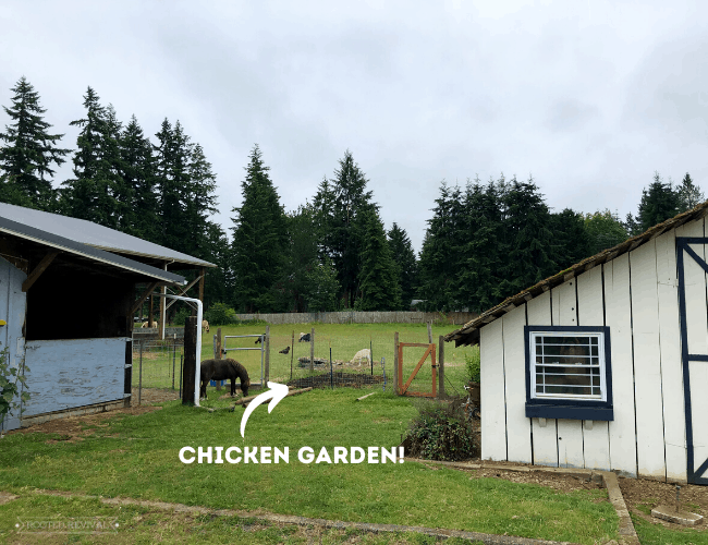 """White arrow pointing to fenced area with caption """"chicken garden"""""""