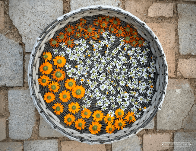 Calendula and chamomile flowers drying in a woven basket