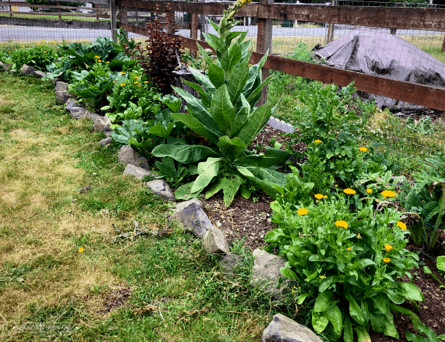 A planter bed containing calendula and a variety of herbs and plants