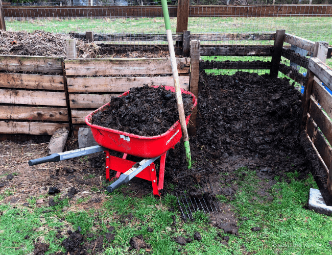 A red wheelbarrow full of compost sitting in front of a 3-bin composter
