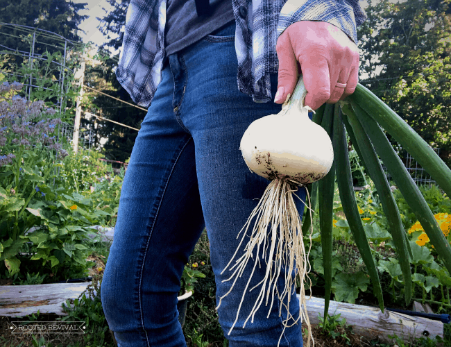 A woman in a plaid shirt and jeans holds a large white onion by her side